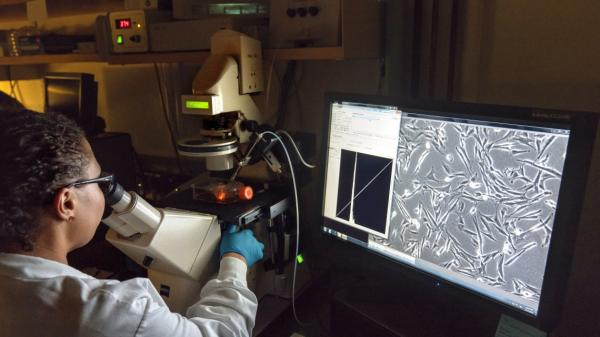 Researchers in professor Gary Whittaker's lab view lab-grown cells through a microscope.